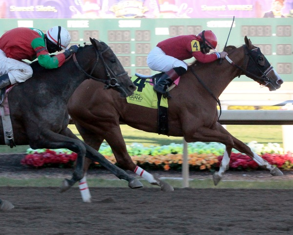 Fireball Baby Sizzles in Miss Indiana Stakes at Indiana Grand Racing & Casino